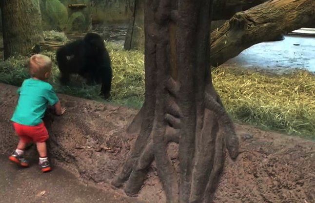 child playing with gorilla video